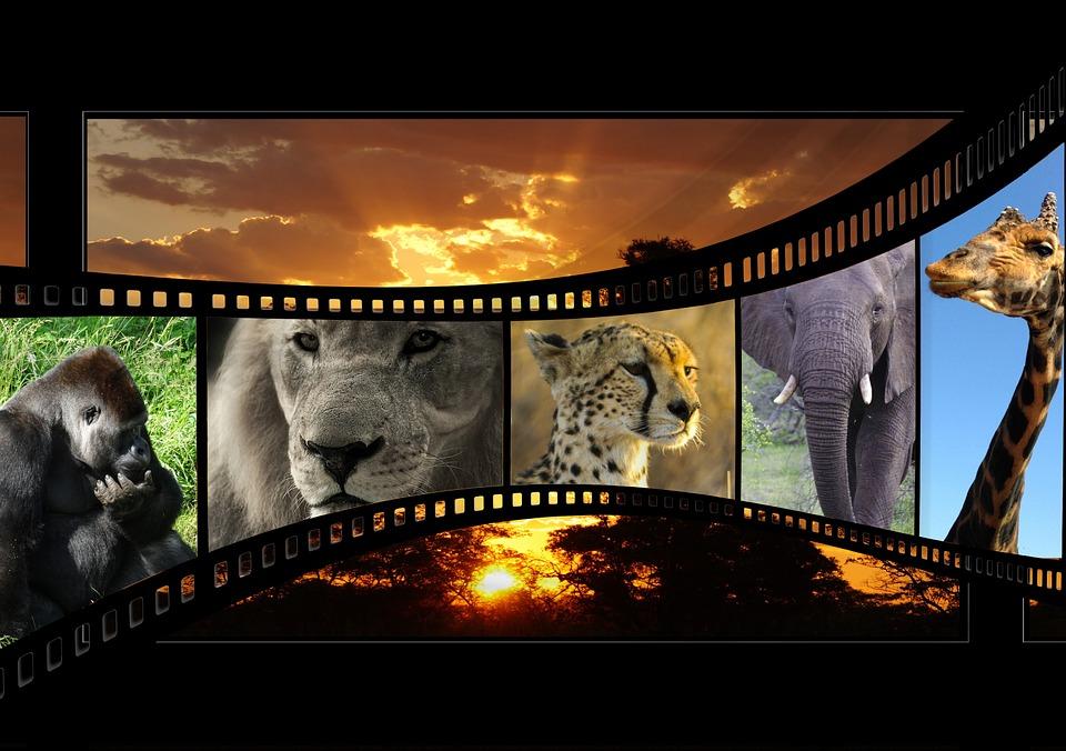 cinématographie africaine